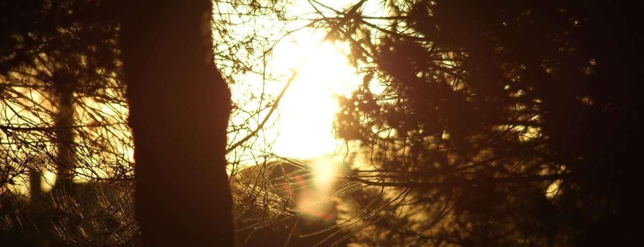 Escapar a la naturaleza en 5 peliculas