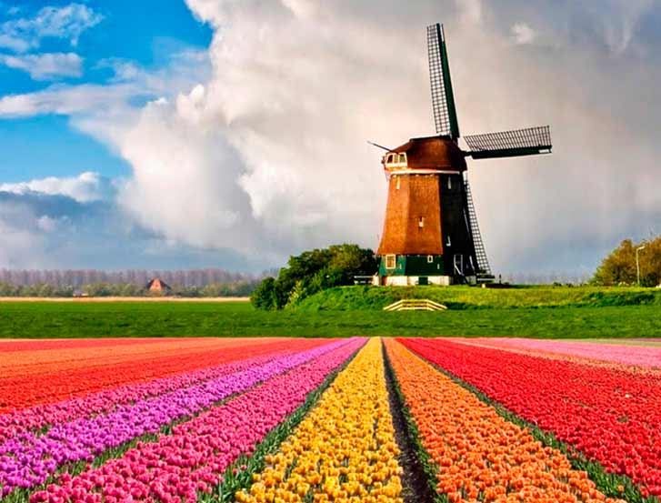 Ruta de los tulipanes